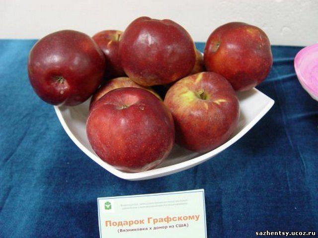 Фото и описание яблони сорт подарок графскому описание фото